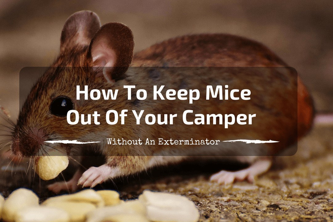 How to Keep Mice Out of Your Camper - feature