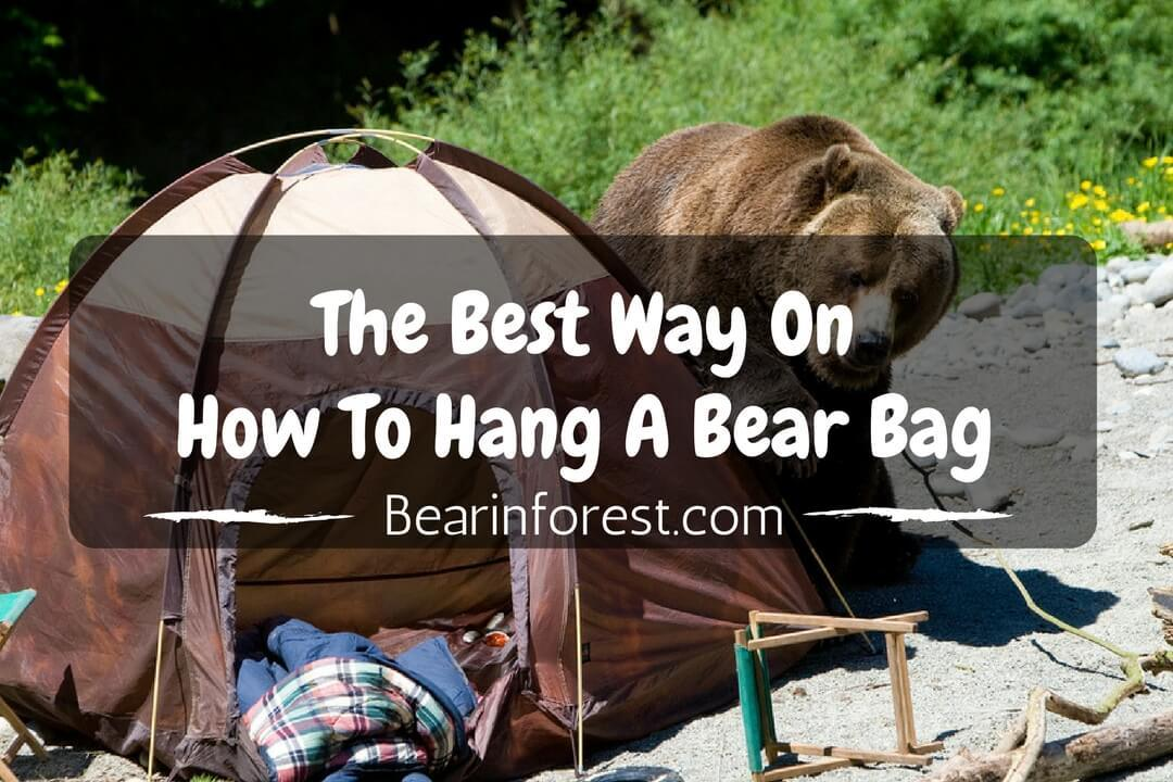 The Best Way On How to Hang a Bear Bag -feature
