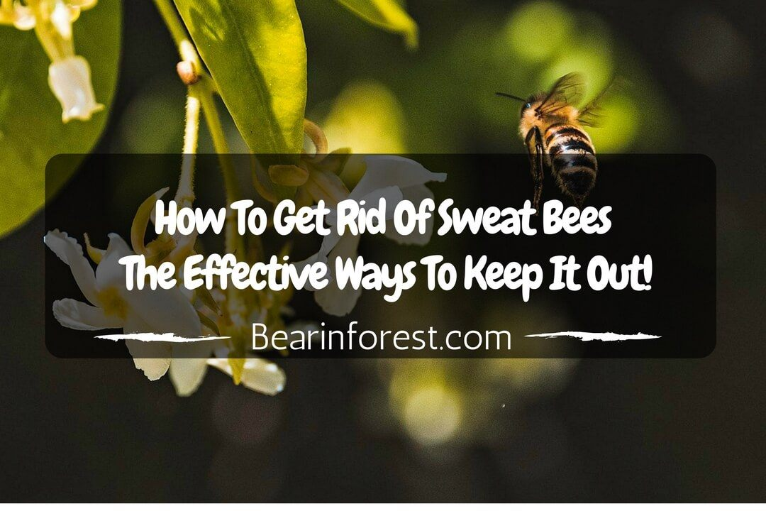 How To Get Rid Of Sweat Bees The Effective Ways To Keep It Out - feature