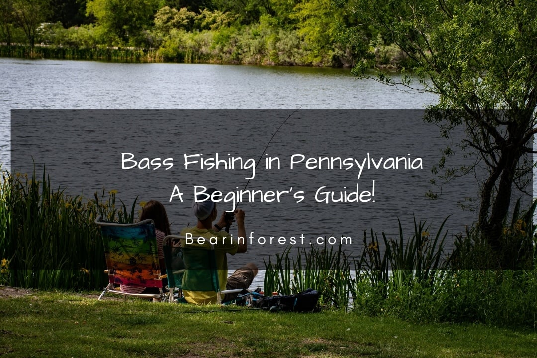 Bass Fishing in Pennsylvania_ A Beginner's Guide!