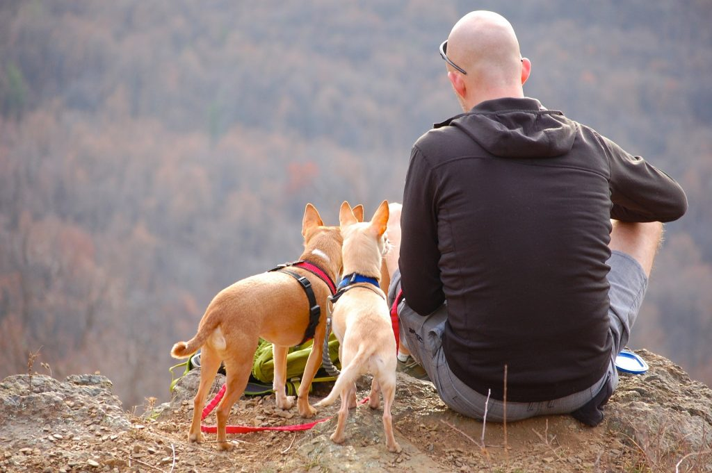 Learn How To Take Dog Camping That Will Make You A Pro 2