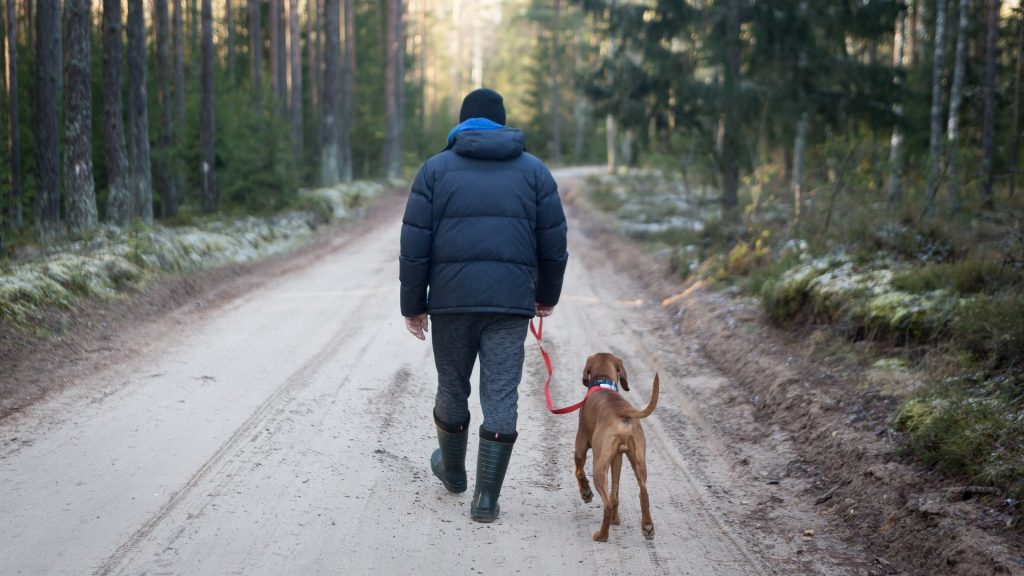 Learn How To Take Dog Camping That Will Make You A Pro 3