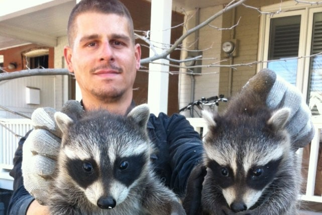 All You Need To Know About Wildlife Animal Removal 3