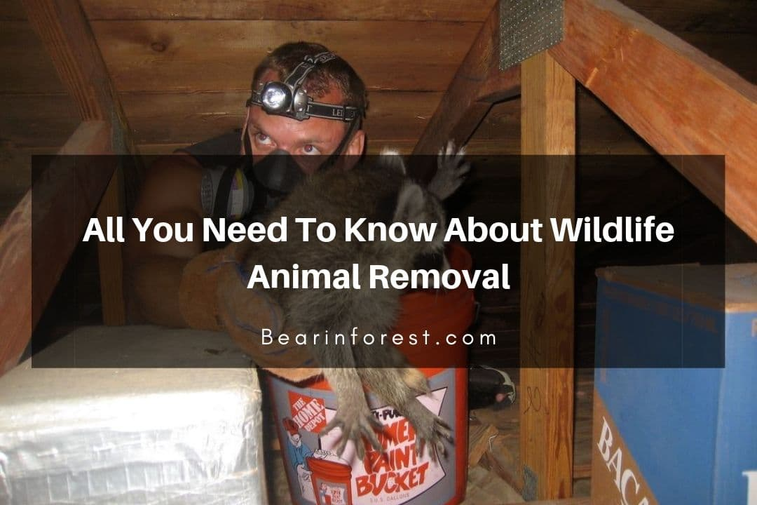 All You Need To Know About Wildlife Animal Removal