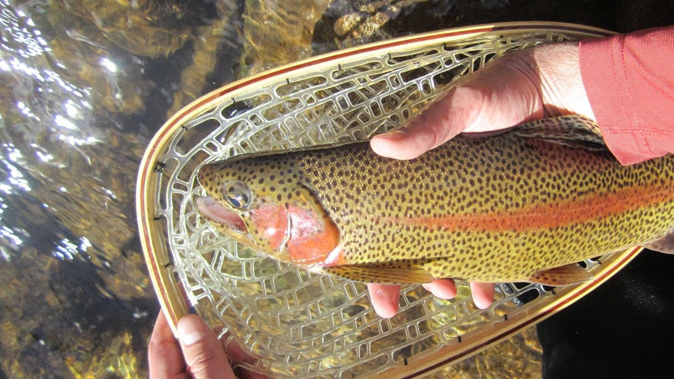 Fly-Fishing-for-beginners-3