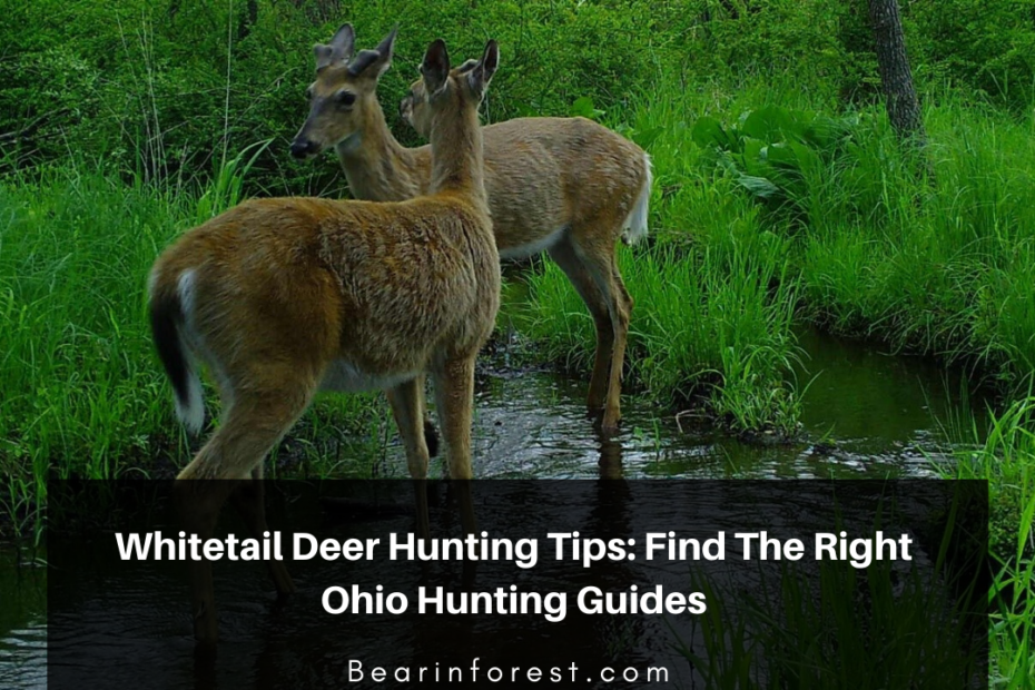 Whitetail Deer Hunting Tips_ Find The Right Guides In Ohio