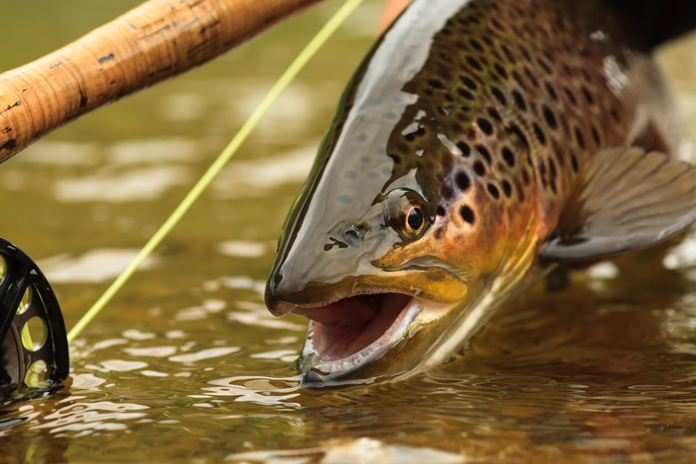Fly Fishing Essentials: The Ultimate Guide